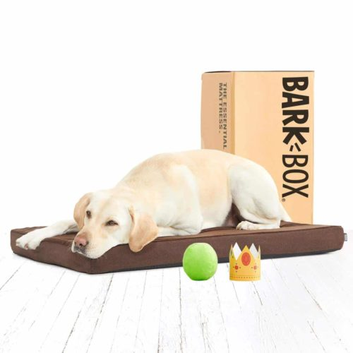 BarkBox Orthopedic Memory Foam Dog Bed