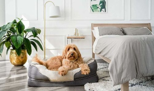 Best Dog Beds of 2021