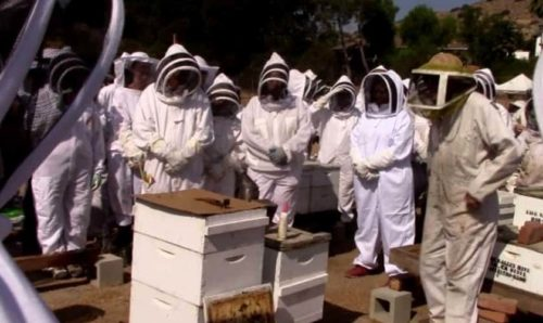 Best Bee Suits